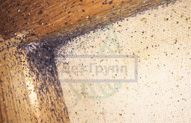 Плесень на кирпичной стене: как избавится, причины